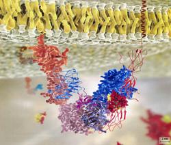 Insuline rouge jaune fixée sur récepteur