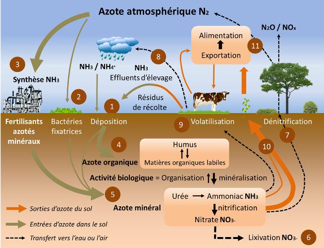 Recyclage par le sol Cycle de l'azote