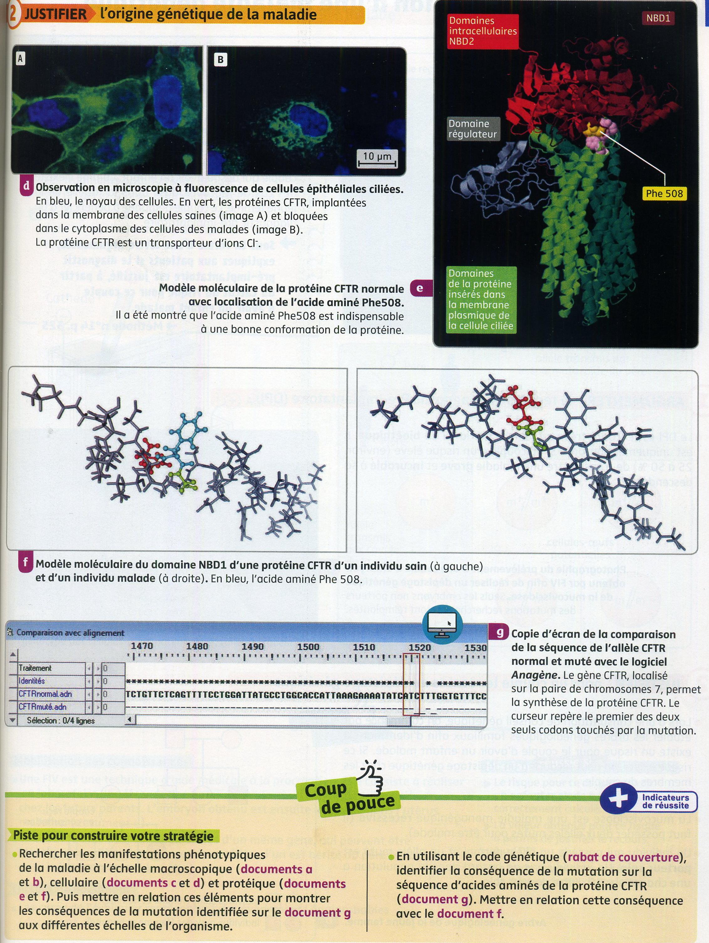 Mucoviscidose_activité_3_(2)