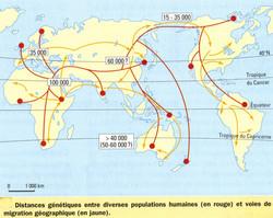 Migration et distance génétique