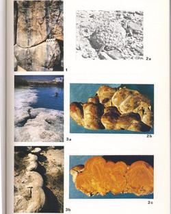 Stromatolites coniques -900Ma