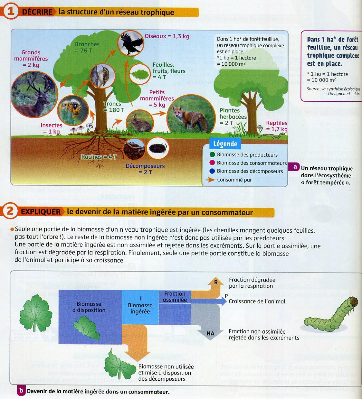 Transfert de biomasse