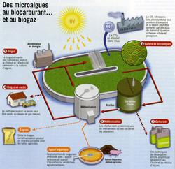 Biogaz Biocarburant microalgues