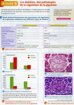 Activité 4 diabète 2 types (1)