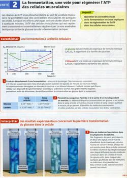 Activité 4 fermentation muscle (1)