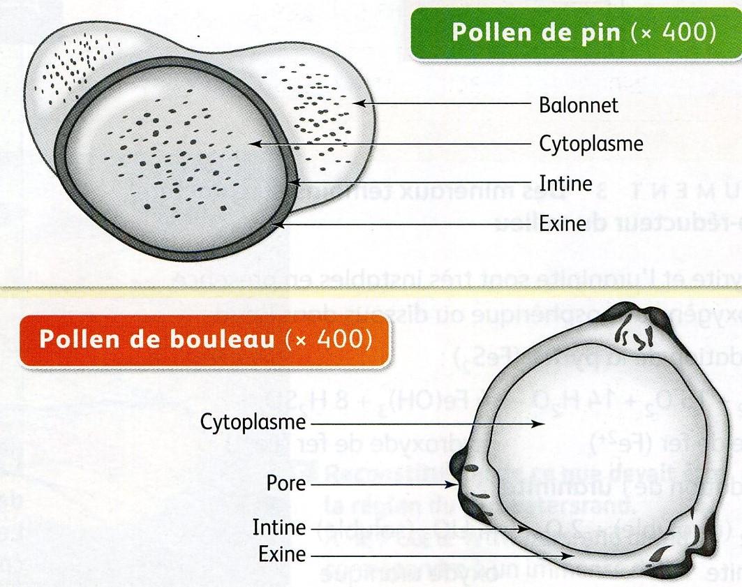 Pollen légendes