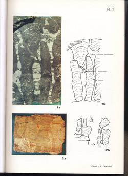 Stromatolite archéen -2500Ma