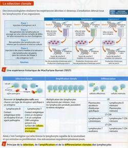 Activité 5 immunité cellulaire (1)