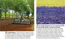 Agroforestie et engrais vert