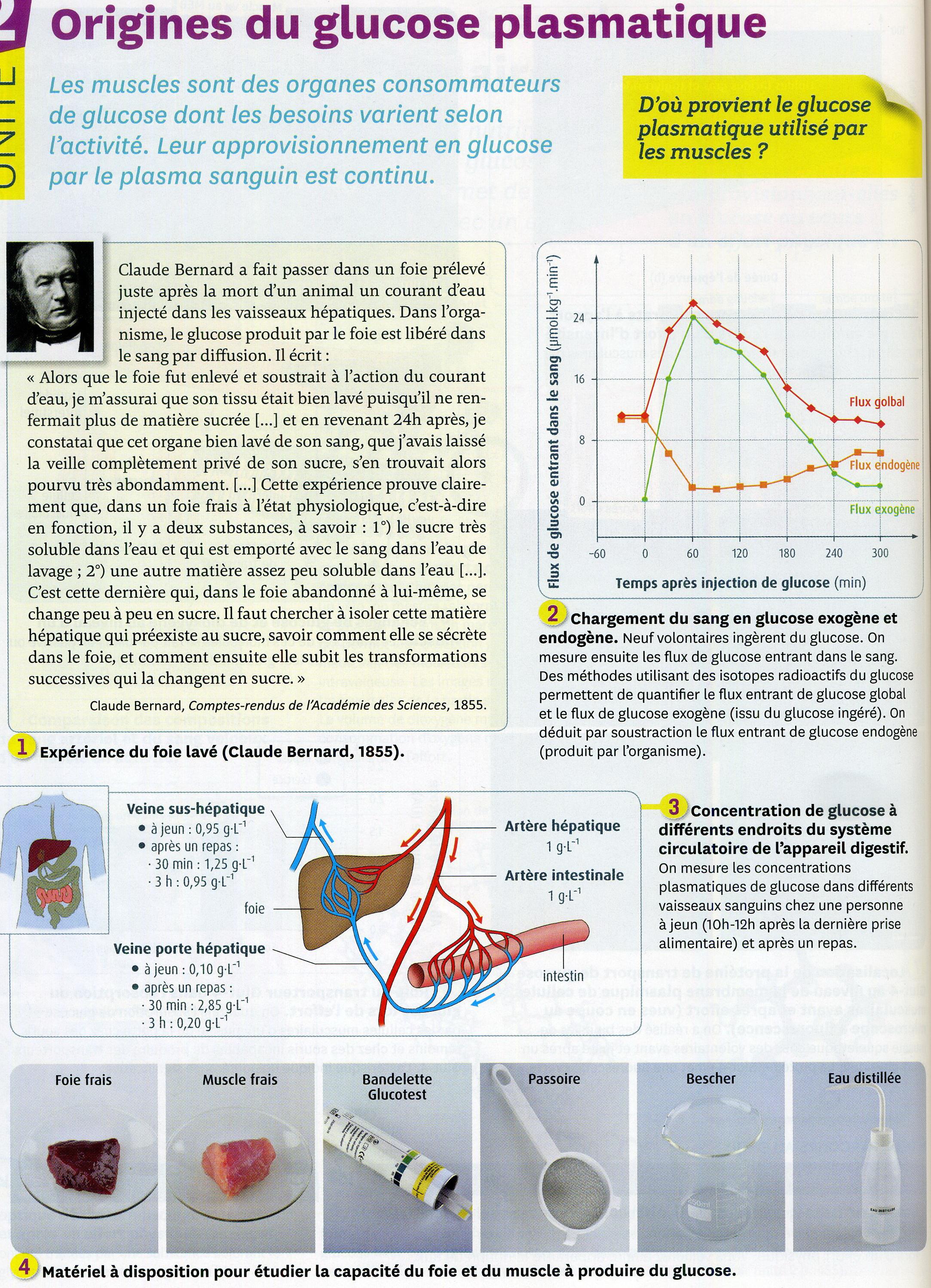Activité 3 origine du glucose (1)
