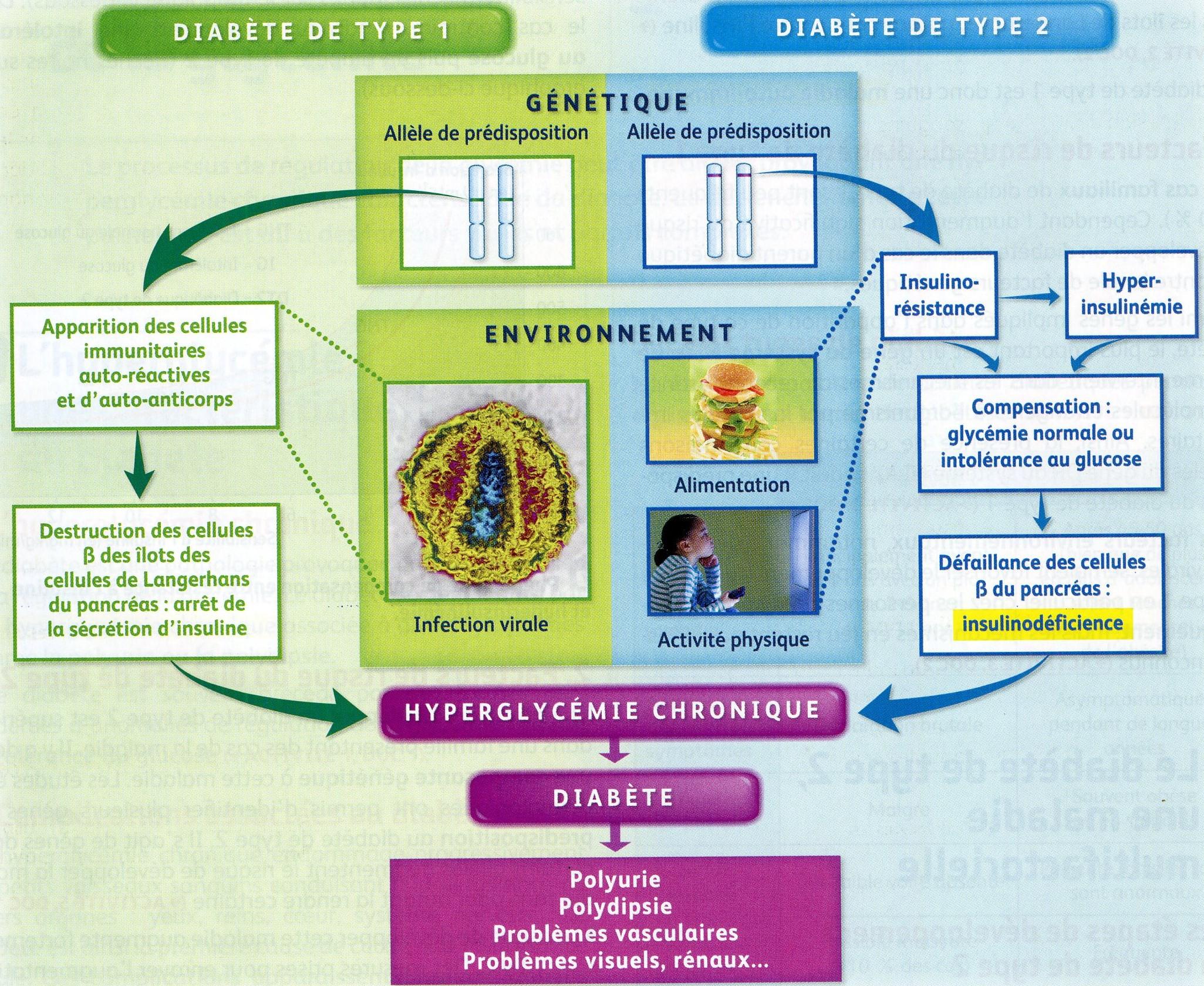 Bilan diabète