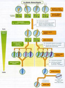 Plante domestiquée bilan
