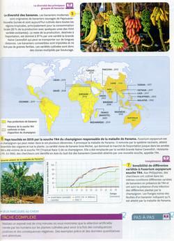 Activité 6 diversité plantes cultivées (