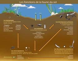 Microfaune du sol