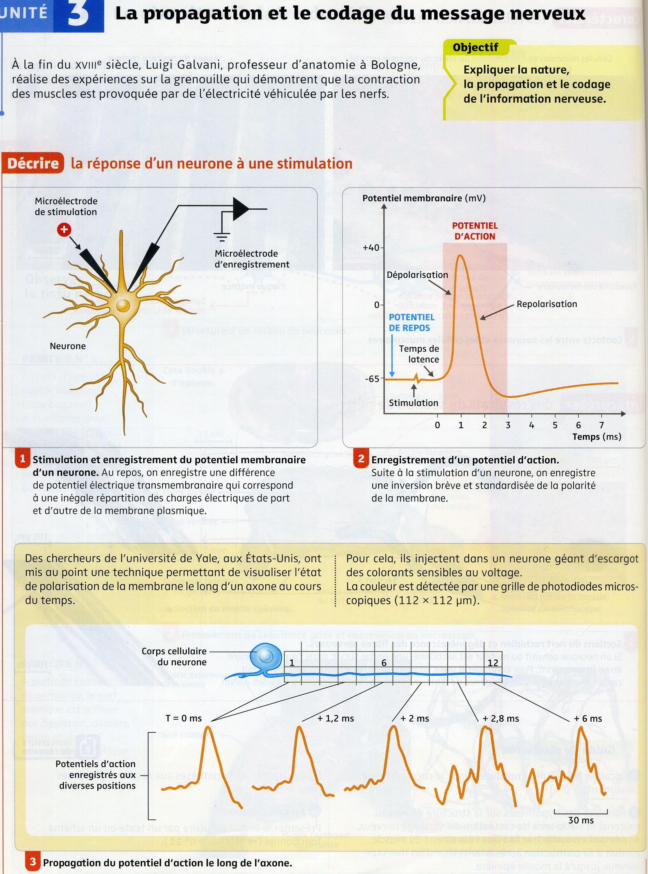 Activité 2 mn propagation (1)