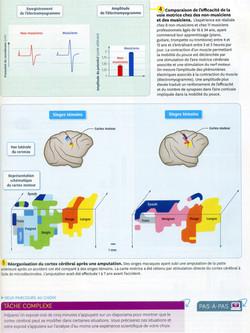 Activité 8 plasticité cérébrale (2)
