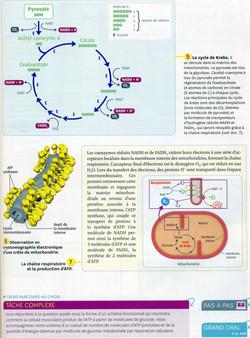 Activité 1 muscle ATP production (2)