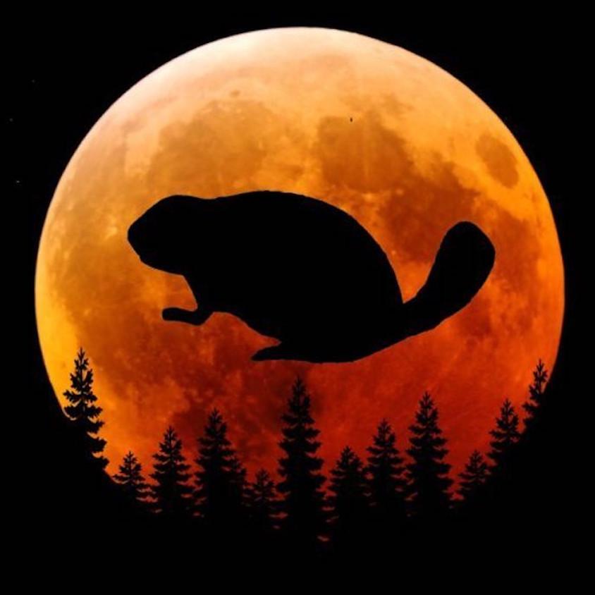 Full Beaver Moon Meditation