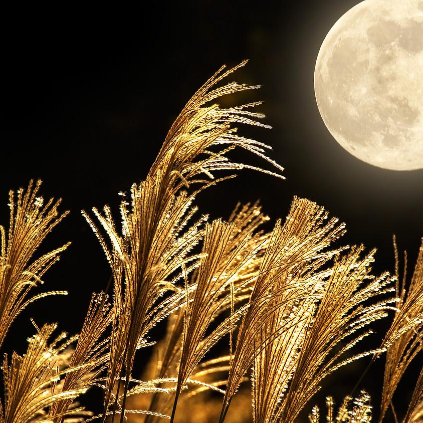 Full Harvest Moon Garden Meditation