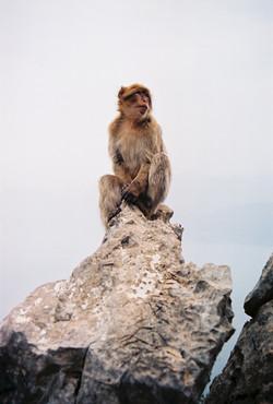 Pic des singes, Bejaia, Algérie