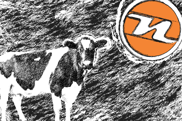 norag cow poster .png