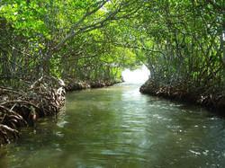 mangrovetunnels