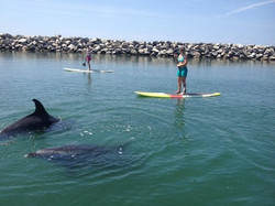 sup-DOLPHINS