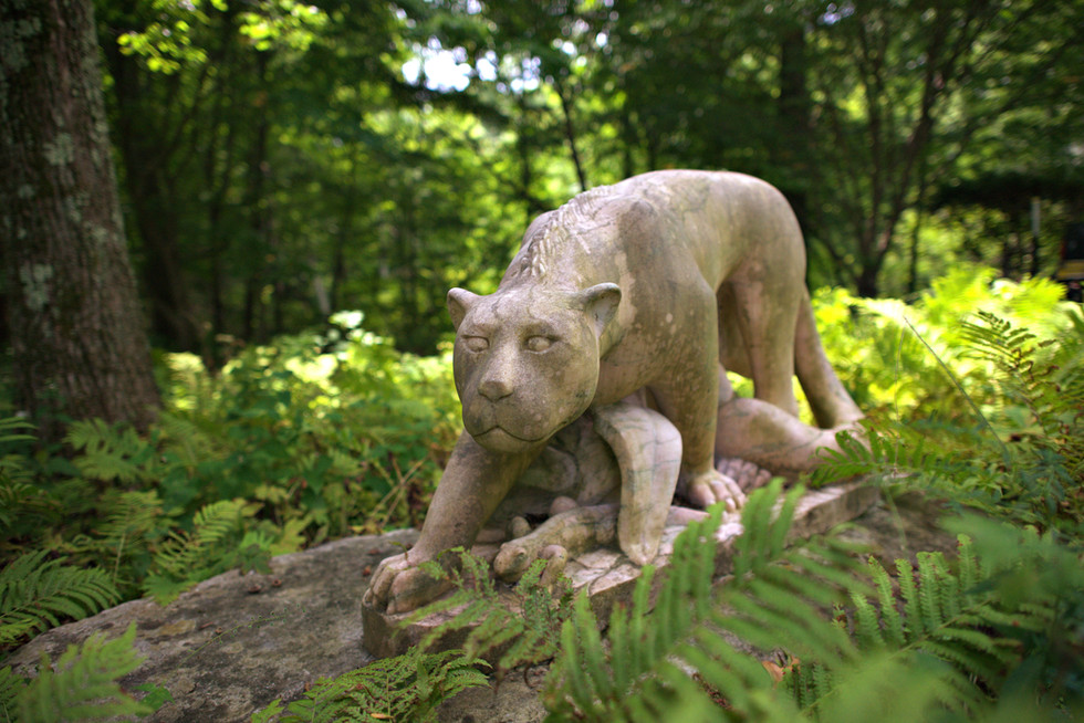 Wilderness Garden 9.jpg