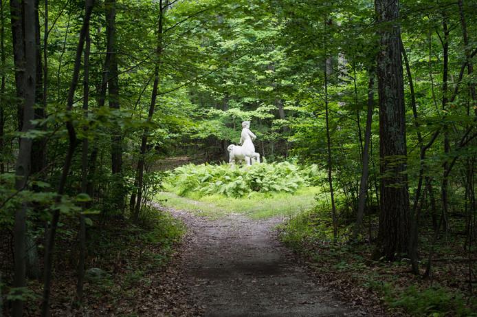Wilderness Garden 13.jpg