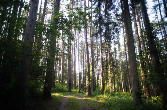 Trails 4.jpg