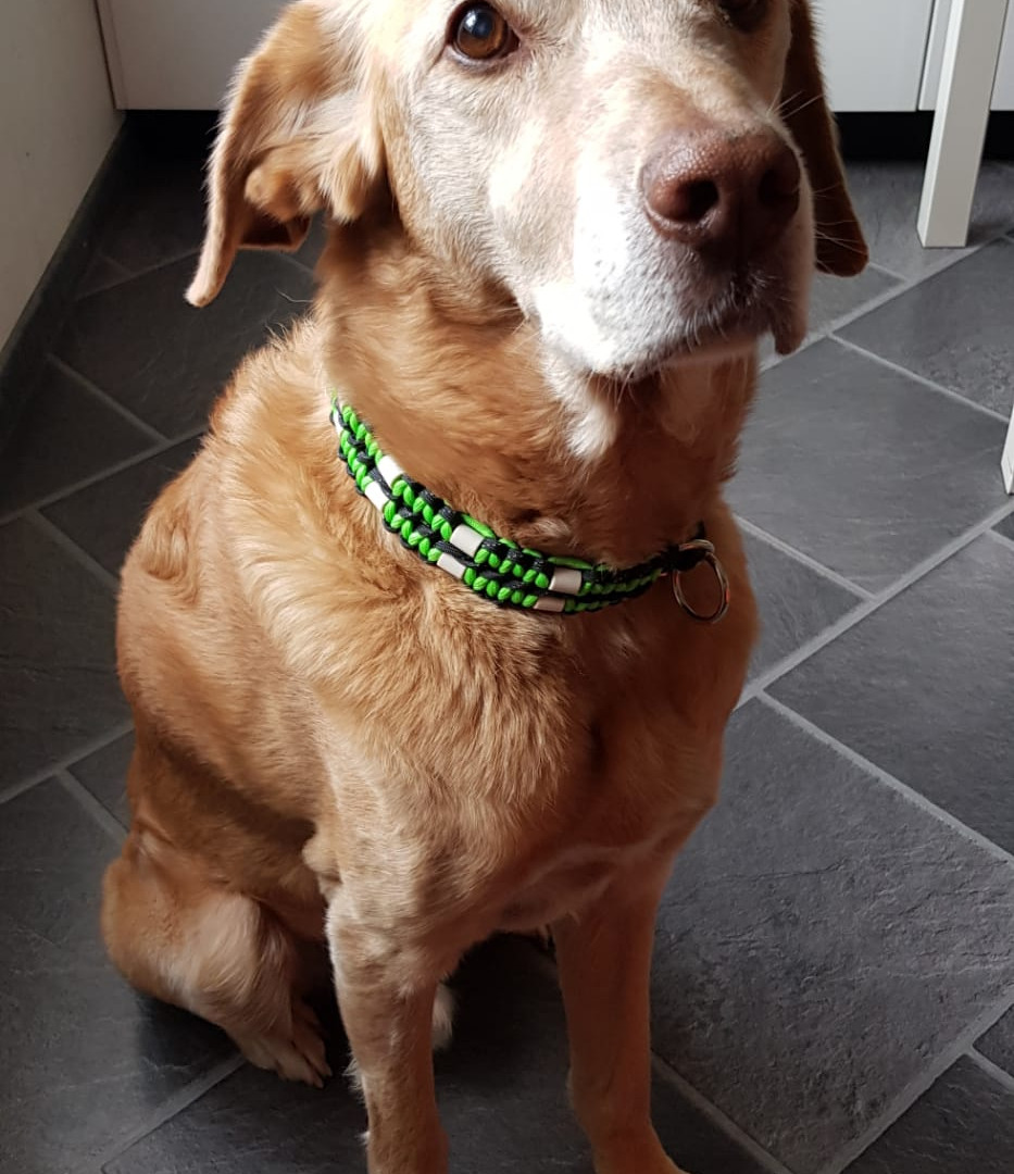 SIMBA mit EM-Keramik Halsband