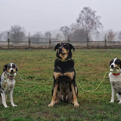 Hundegang