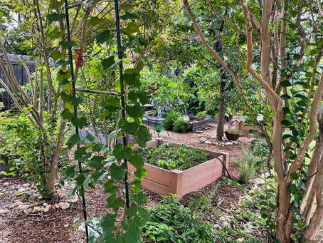 Building Community: Winter Gardening!