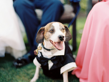 This wedding party pup was looking good