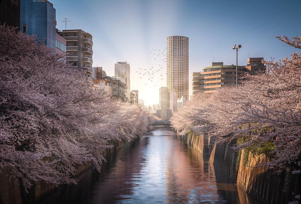 Meguro River-Nicolas Wauters Japan Photo