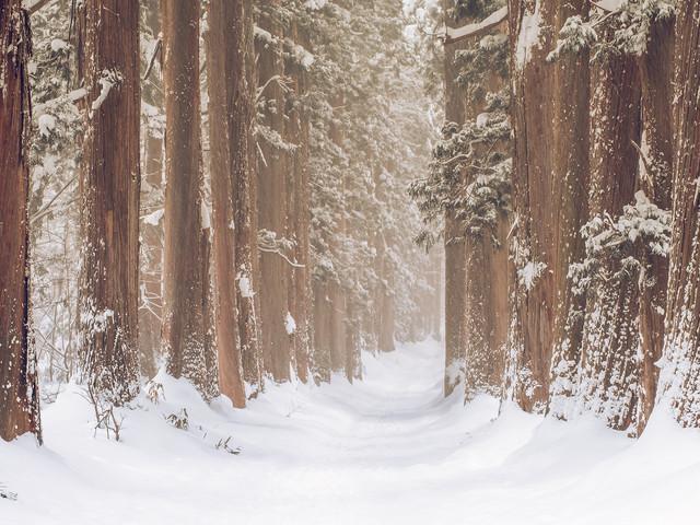 La forêt de Togakushi