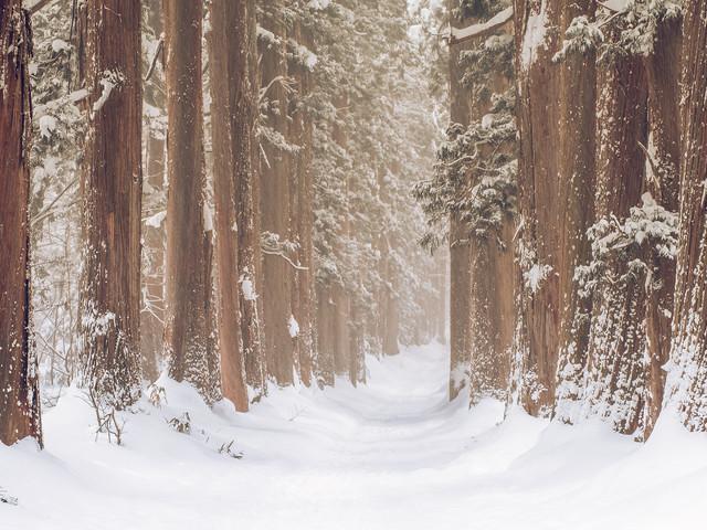 La forêt Togakushi