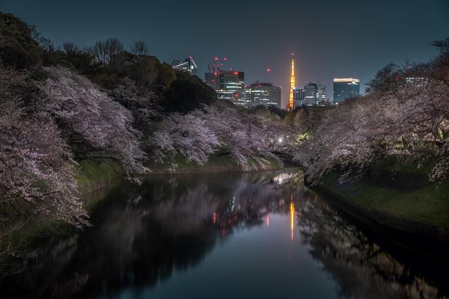 Tokyo & Sakura