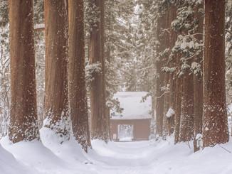 Togakushi Forest
