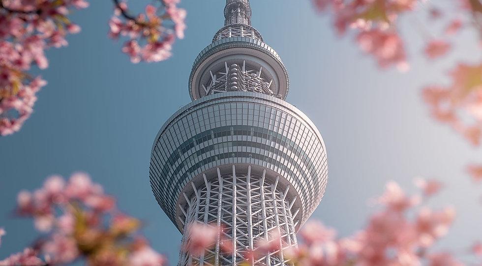 Voyages et stages photos japon au printemps