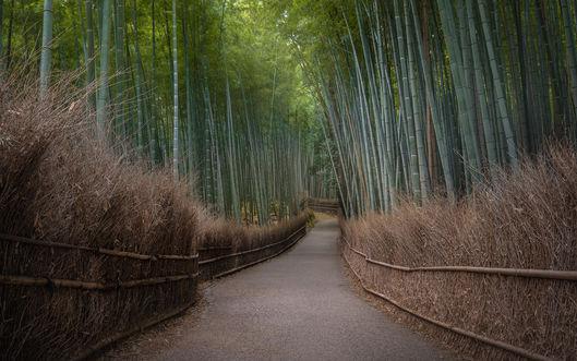Forêt de bambous d'Arashiyama