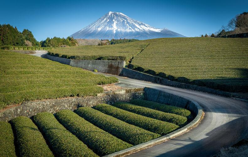 Mont-Fuji & Thé