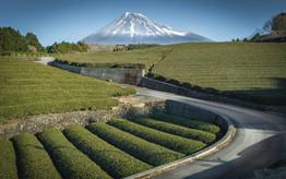 Mount-Fuji and tea