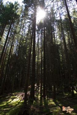 Woodlands in Dzembronya