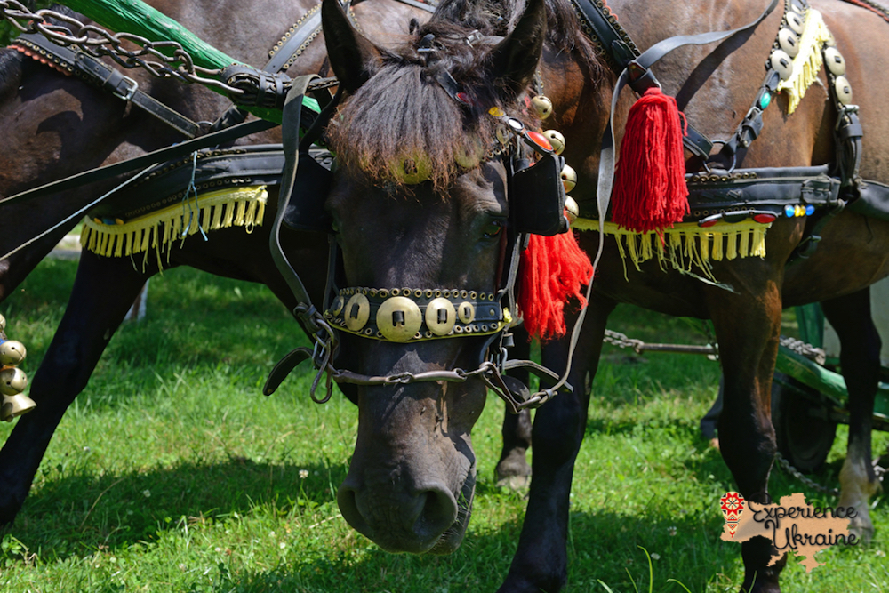 Close of Ukrainian cart horses LR-imp