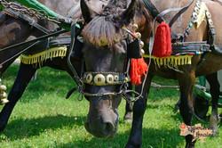 Close of Ukrainian cart horses LR-imp