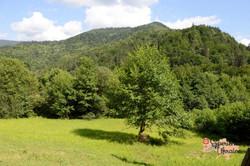 Natural woodland zones-imp