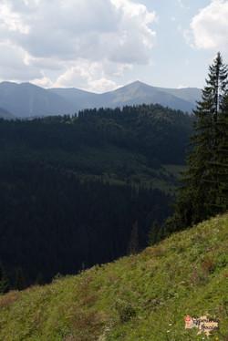 Beauty of Carpathian Mountains