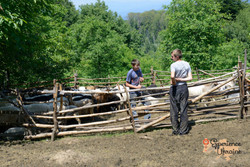 Goats in pen with boy shepherds-imp