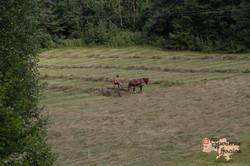 Turning hay in Dzembronya